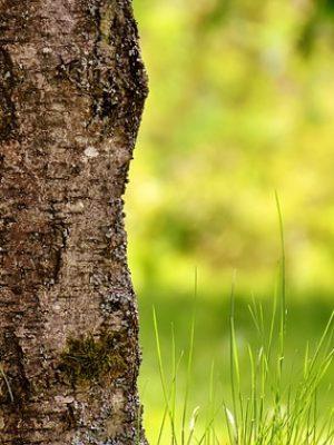 tree-2327751_640